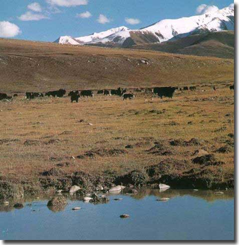 The Bayankala Mountians. The source of the Yellow River is a basin at the foot of these mountains.